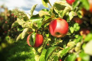 In einer beeindruckenden Ausstellung gespickt mit Aktivitäten und Degustationen entdecken Sie die Geheimnisse der jurassischen Fruchtbrennerei