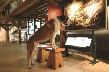 Für die Museumsnacht hat Barryland eine pelzige Ausstellung zusammengestellt, bei der Sie die Bernhardiner aus nächster Nähe erleben können!