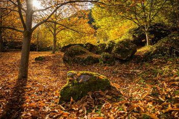 Hier gibt es die buntesten Wälder und Rebberge