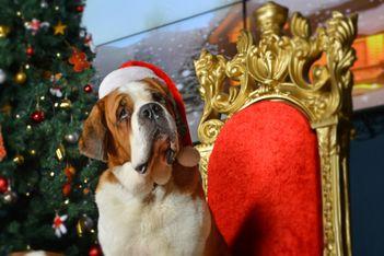 Zu Weihnachten gibt es 20% Rabatt auf Barryland-Geschenkgutscheine