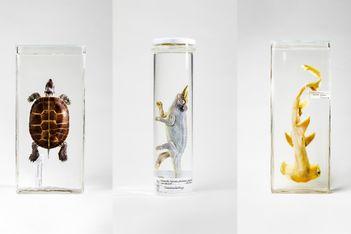 Spannende Einblicke in die wissenschaftliche Sammlung des Museums
