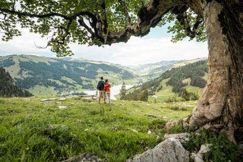 Fünf Reisen in's Grüne, damit Sie diesen Sommer neue Energie tanken können