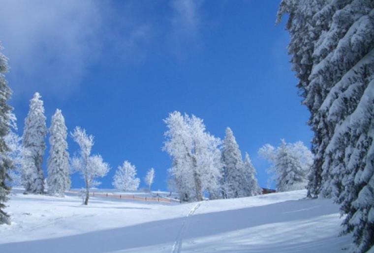 Skigebiet_Jura_Winter_Schnee_Baum.png