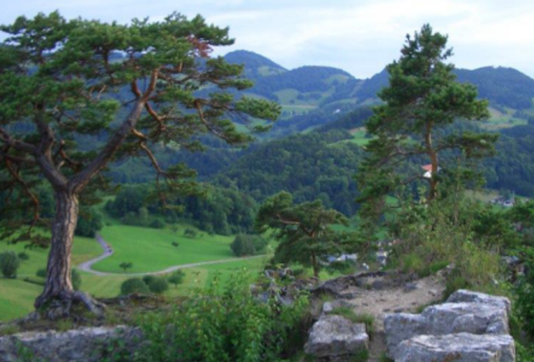 Rifenstein_Sagenweg_Reigoldswil_Panorama.png