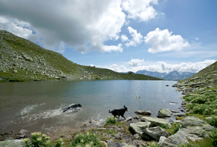 Bellwald_leckytrail_See_Hund.png