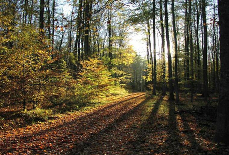 Uetliberg_Felsenegg_Zürich_Planetenweg_Wald.png