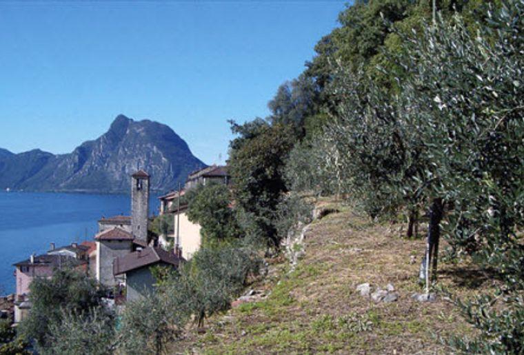 Olivenweg Gandria 1.jpg
