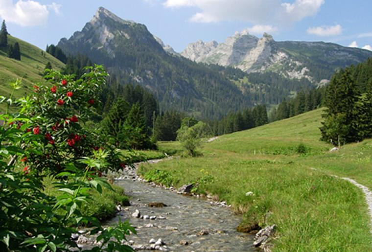naturpark_diemtigtal_Bern_Bach.png