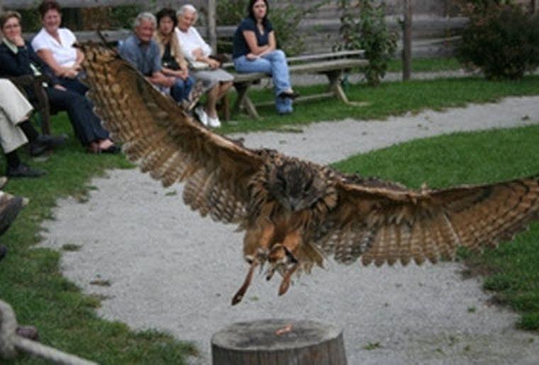 Greifvogelpark 6.jpg