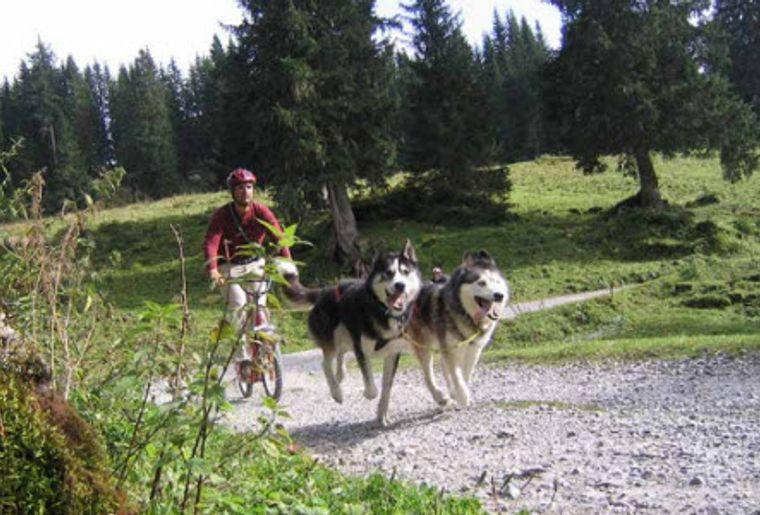 Erlebniswelt Muothatal 3_Husky-Trottiplausch.jpg