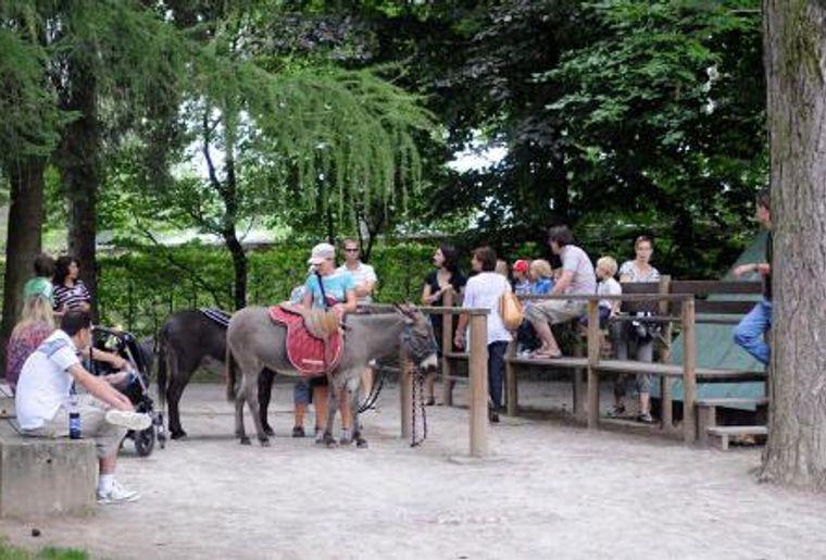 Park im Grüene Rüschlikon, Eselreiten.jpg