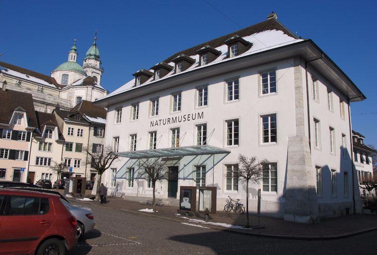 Naturmuseum_Solothurn.JPG