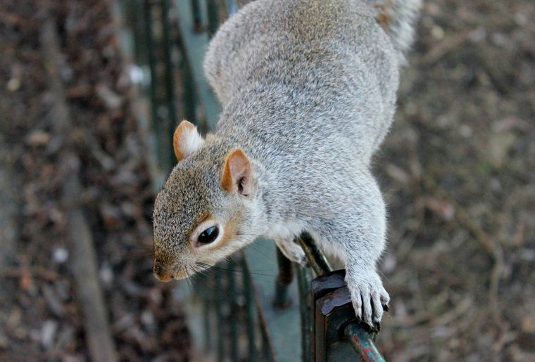 squirrel-111258_1920.jpg