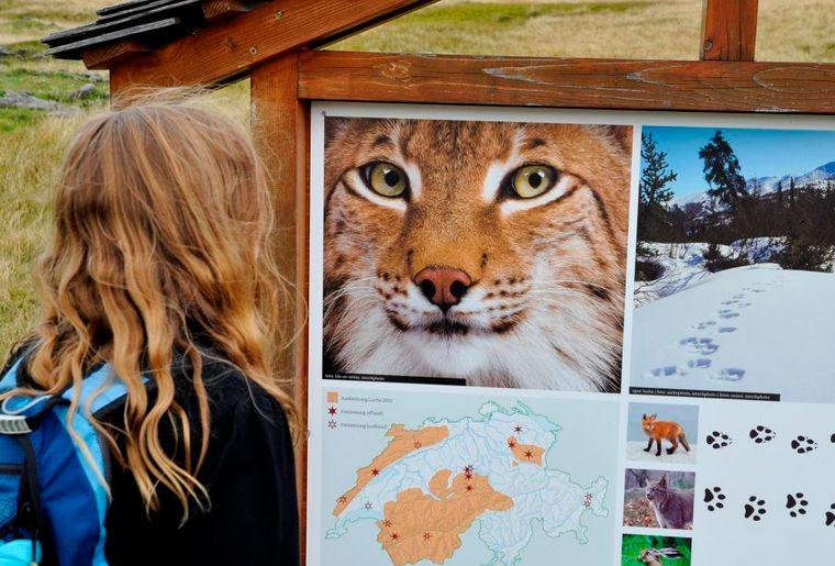 Lenk-Simmental_Trails_Luchs-Trail_Betelberg Copyright_Lenk_Bergbahnen_DSC0447_kompr.jpg