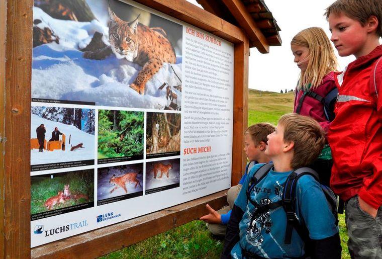 Lenk-Simmental_Trails_Luchs-Trail_Betelberg Copyright_Lenk_Bergbahnen_DSC0504_kompr.jpg