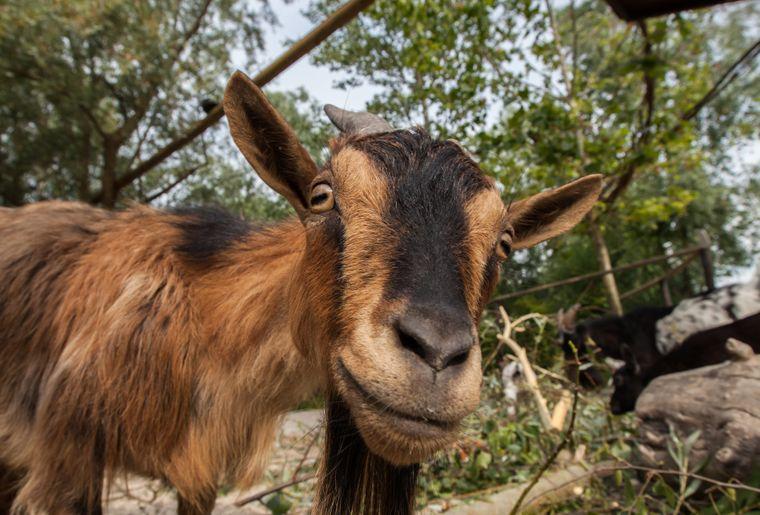 papiliorma-animaux-ferme-parc.jpg