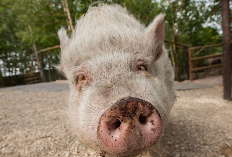 papiliorama-animaux-ferme-zoo.jpg