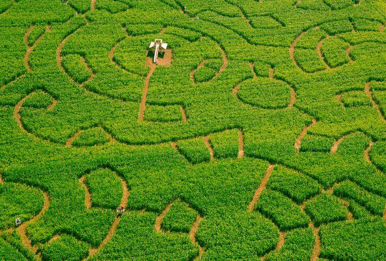 Swiss Labyrinthe - Sommer in der Schweiz.jpg