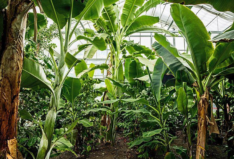 Garten-Dschungel.jpg