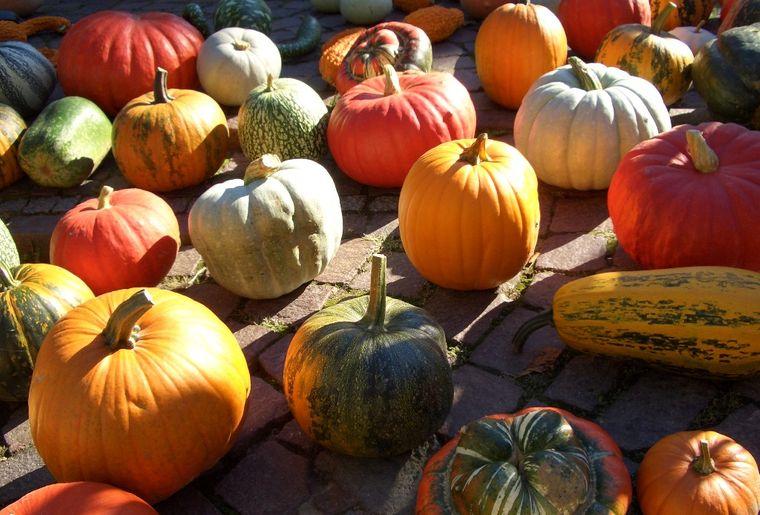 pumpkins-1329596.jpg