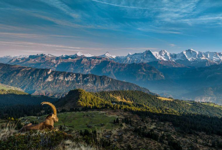 gemmenalphorn auf berner alpen low res ST - Herbst in der Schweiz.jpg