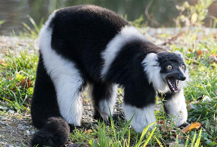 Zoo_Basel_Varis5_red.jpg