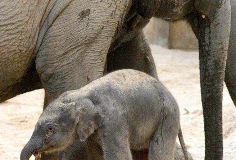 Elefantenbaby2_red.jpg