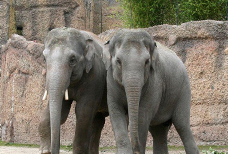 Elefantenbaby6_red.jpg
