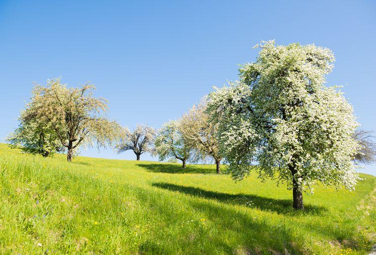 Obstbäume-bei-winterthur.jpg