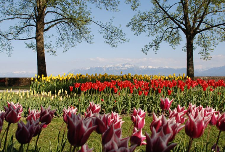 Tulpenfest_Morges-tourisme_red.jpg