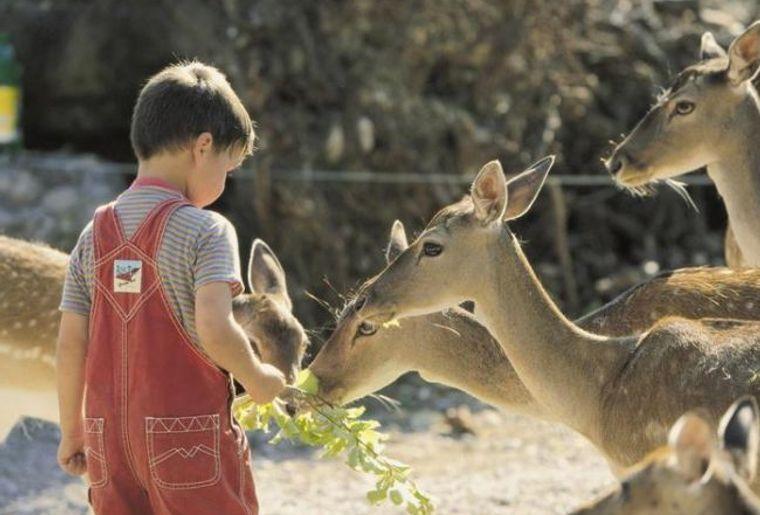 Natur_Tierppark_Goldau.jpg