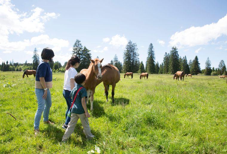des_chevaux_et_des_hommes_5.jpg