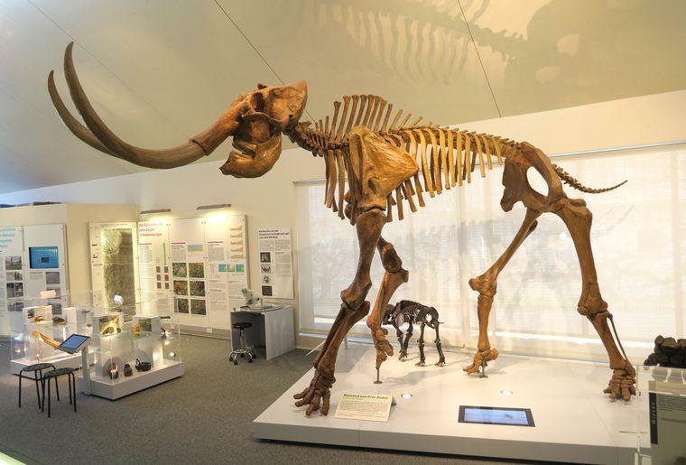 Mammutrekonstruktion von der Fundstelle Praz-Rodet.JPG