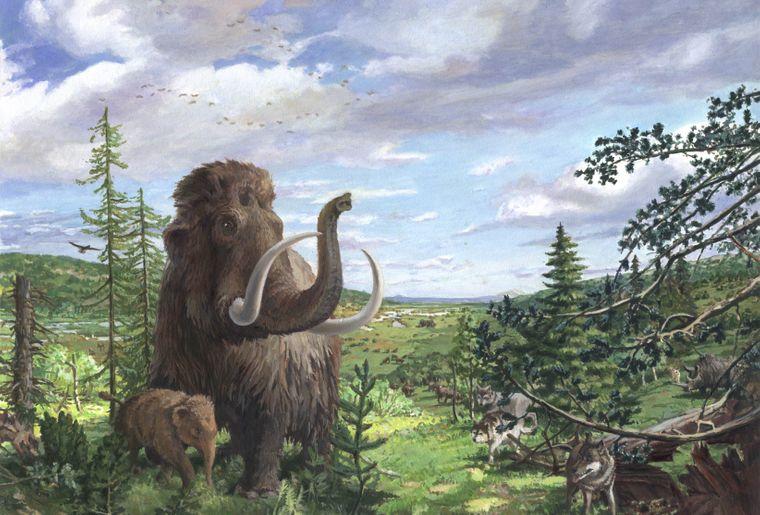 Mammut-Wandbild.JPG