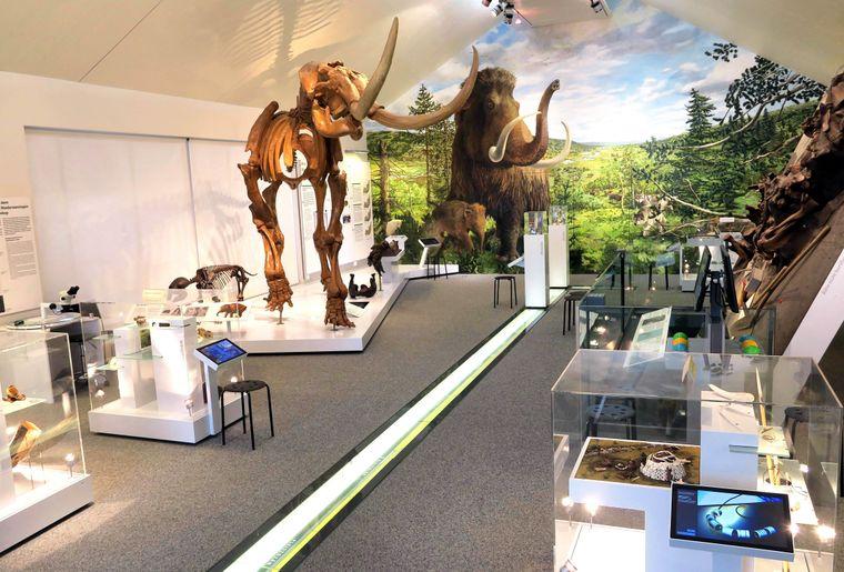 Blick ins Museum-3.JPG