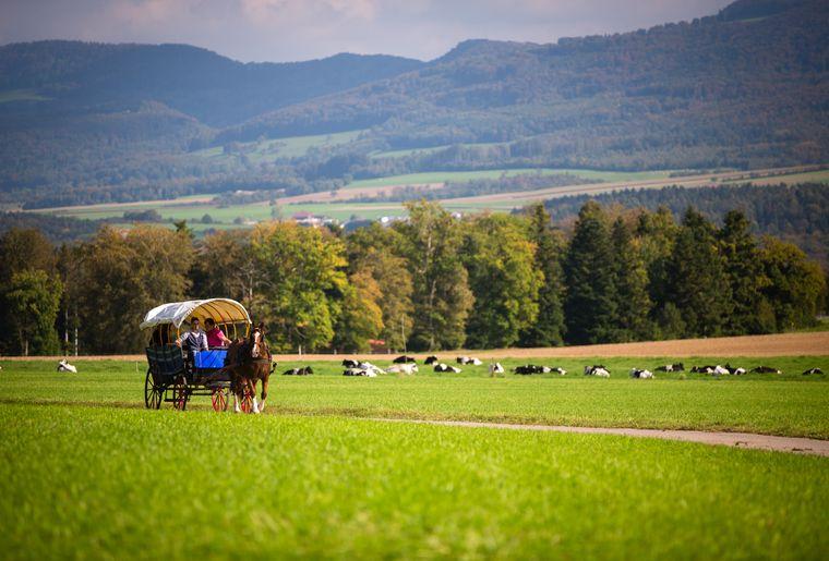 Pferdetourismus im Jura
