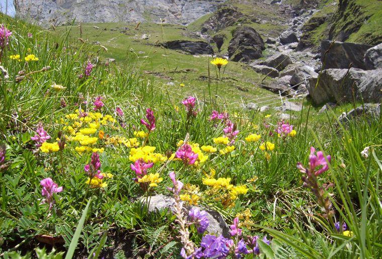 BotanischeExkTitelseite.jpg