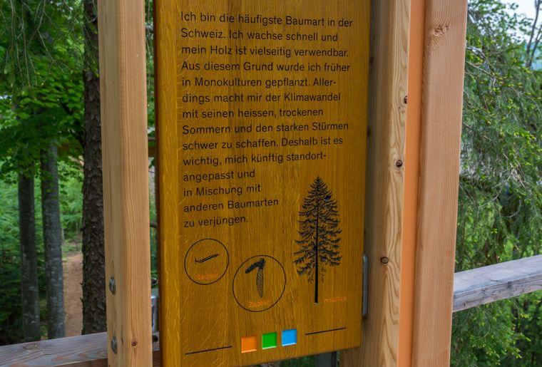 Baumwipfelpfad Neckertal Infostation.jpg