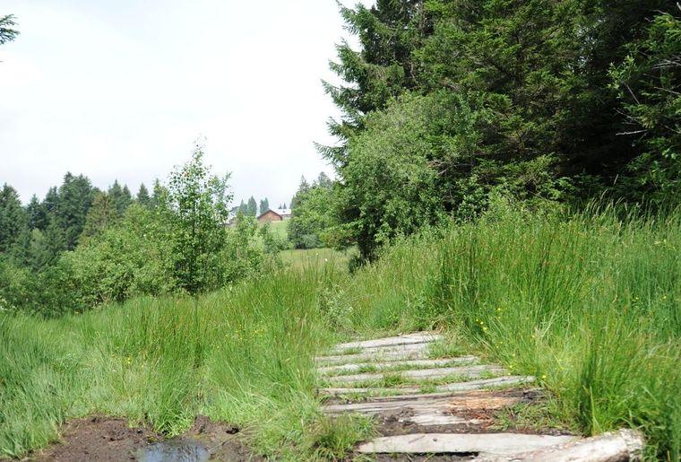 Barfuss durchs Hochmoor.jpg