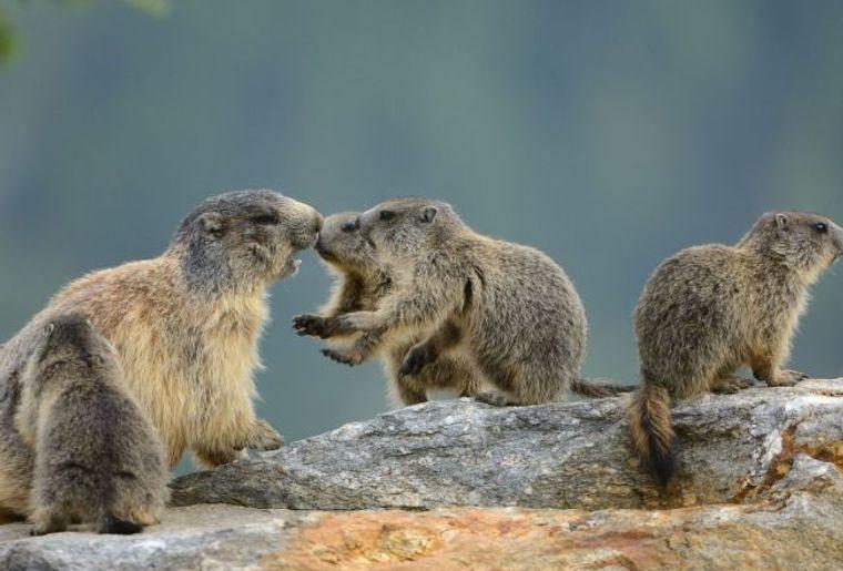 Charlotte la Marmotte.jpg