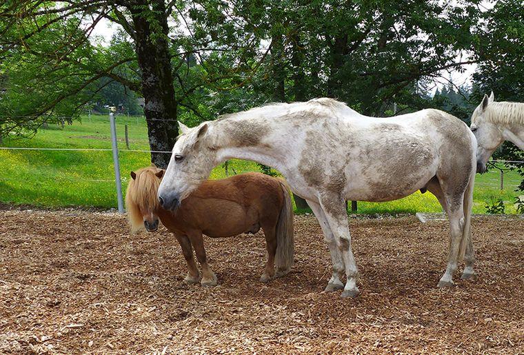 Xander c Stiftung für das Pferd.jpg
