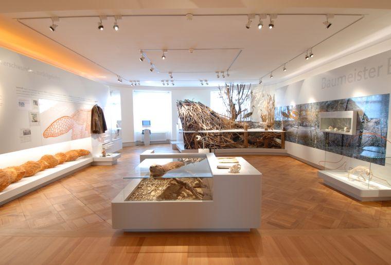 Dauerausstellung_Biberbau_Daniel Steiner_Frauenfeld.JPG