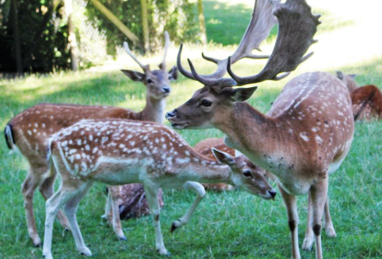Tierpark Langenthal.PNG