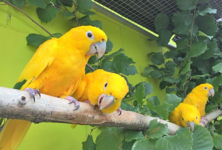 Vogelpark Ambigua.jpg