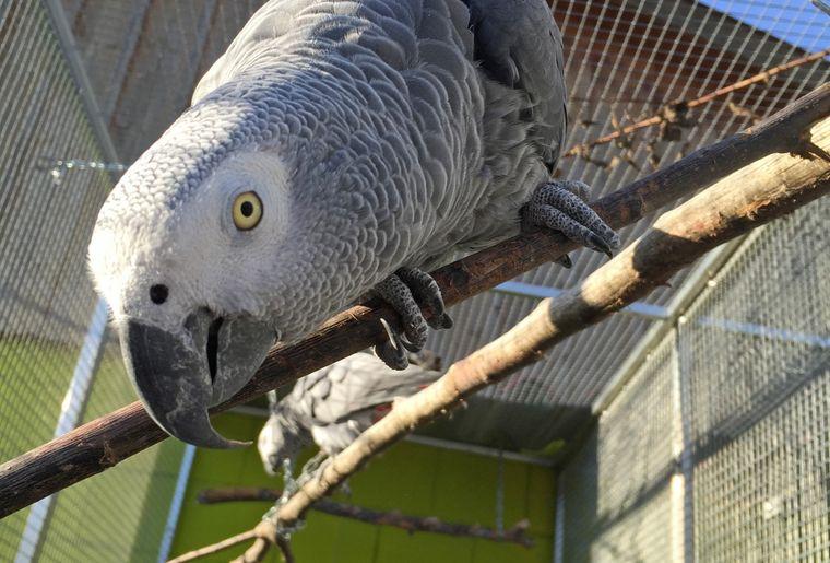 Vogelpark Ambigua 3.jpg