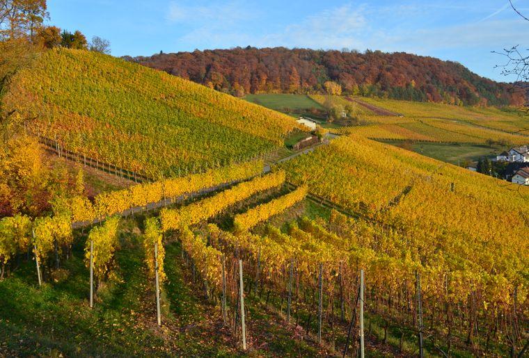 20180830_Weinwanderweg_Raihalde_©Baumgartner Weinbau.JPG