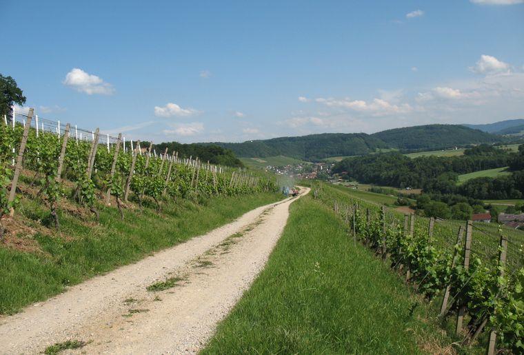 20180830_Weinwanderweg_Wanderweg_©Bad Zurzach Tourismus.JPG