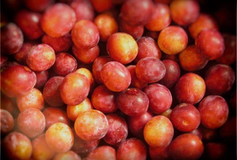 1464185829_damassine_fruits_006.jpg