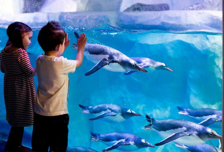Penguins (C) SEA LIFE.jpg