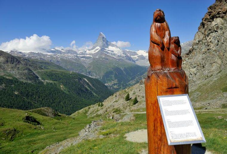 Zermatt Murmeltier-Holzskulptur mit Infotafel c Zermatt Tourismus Michael Portmann.jpg
